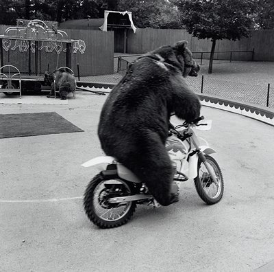 bear riding on a motorcycle; small wagon and another bear behind