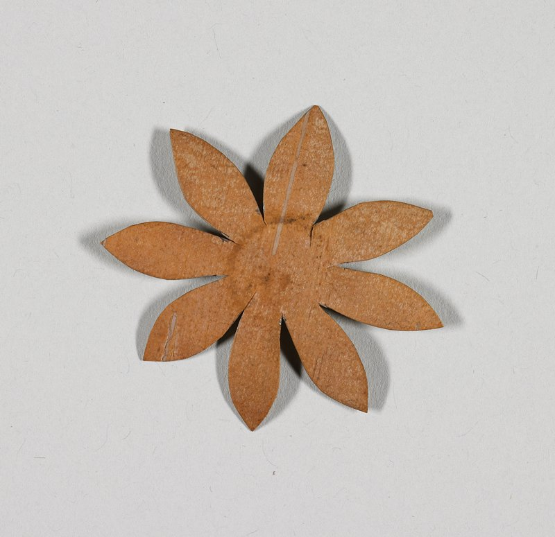 daisy shape, with eight petals; medium brown on one side, light brown on opposite side