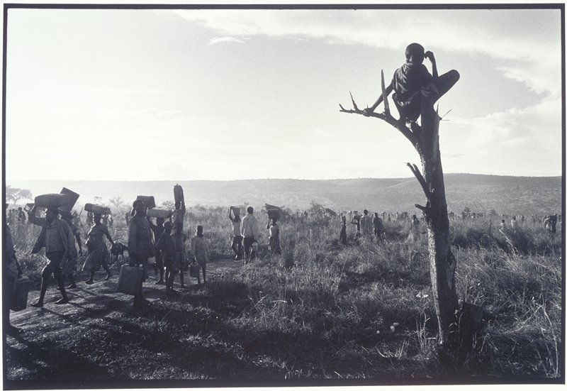 people walking, some stopping to look at a boy sitting in a dead tree