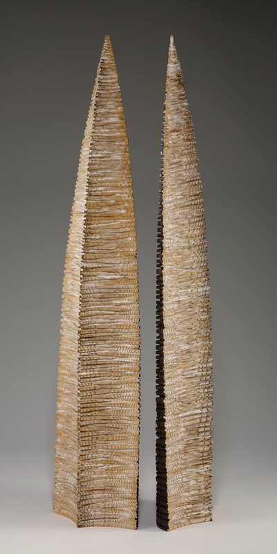 06-16; two arrowhead-shaped forms with regular, rough horizontal ridges; dark on one side and light on the other