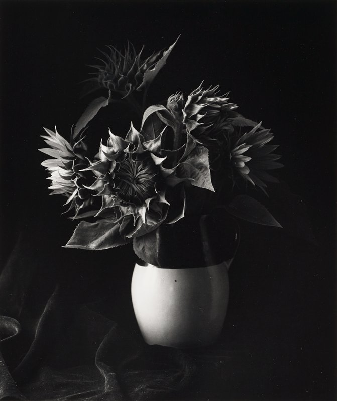 bouquet of sunflowers in a pitcher; cloth below and behind pitcher