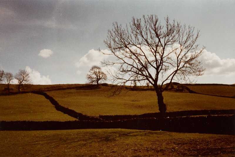 bare trees against a blue sky with clouds; brown fields with dark brown linear areas