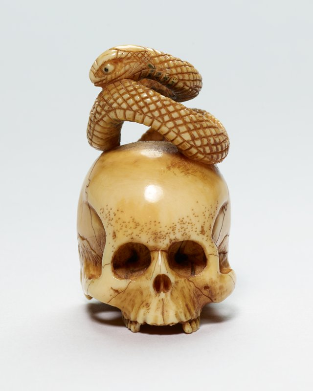 skull with snake coiled on top; tail curving down back of skull; no lower jaw
