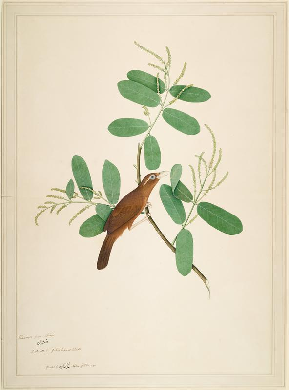 image of a brown bird perched on a branch that has long oval leaves; thin gold frame