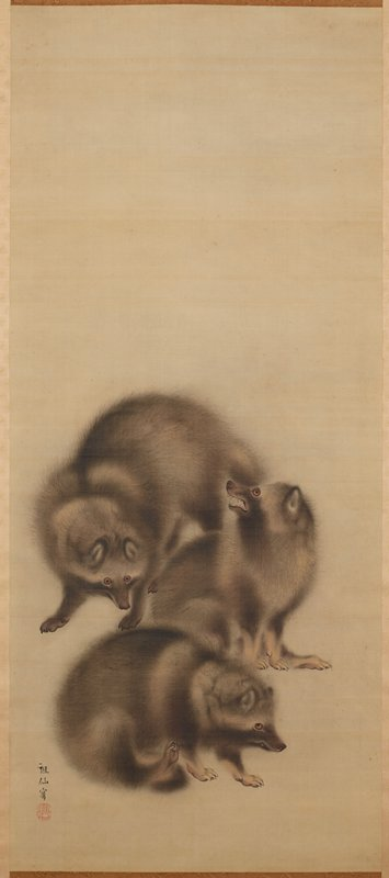 three raccoon dogs with fuzzy fur; bottom animal is scratching; middle animal is seated, snarling; top animal is standing