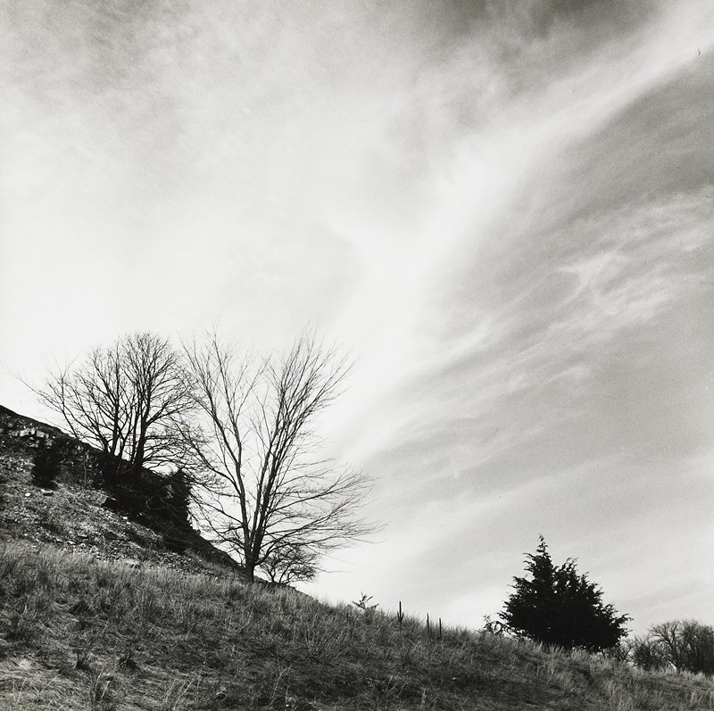 bluff with grasses; bare trees at L and R with evergreens to L of trees in LRC; sky with streaky clouds
