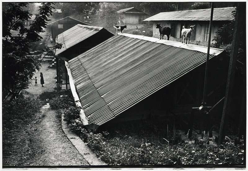 perspective of two steel-ribbed roofs with three goats on peak of one