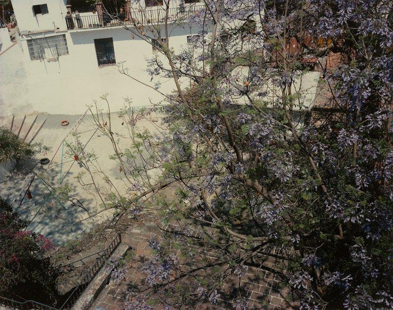 courtyard; tree with purple flowers, right half; white wall UL half