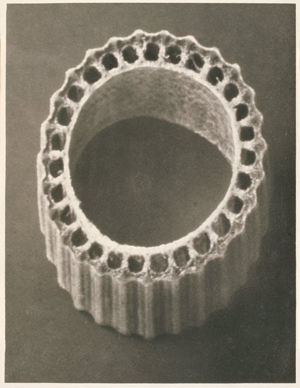 ring shaped plant segment with striations on exterior and open holes on interior between two walls