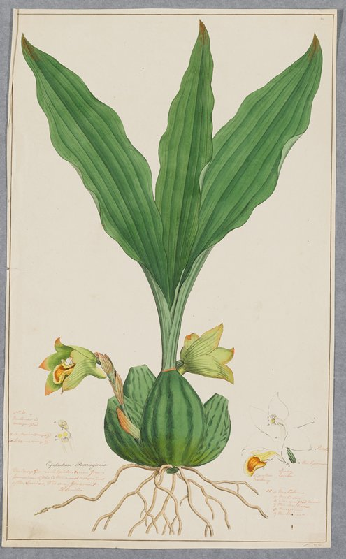 Plate 15, one of 18 hand-colored engravings of flowering plants by Sowerby