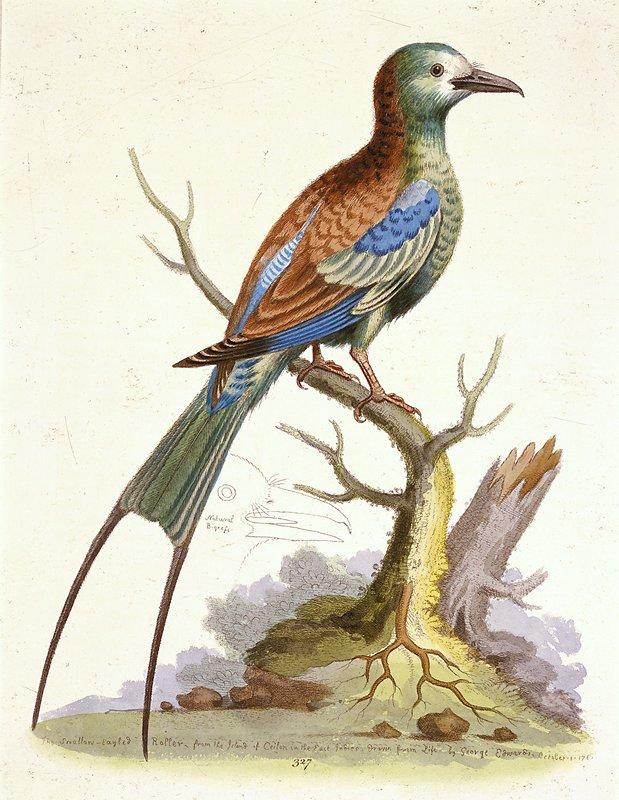 birds; plate 327