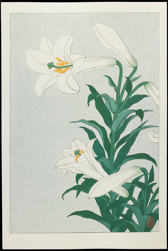 A lily, recognisable by its snowy white pendulous flowers. A number of species of lily grow in Japan where they are cultivated as ornamentals and for their edible bulbs. (Newland 2010)
