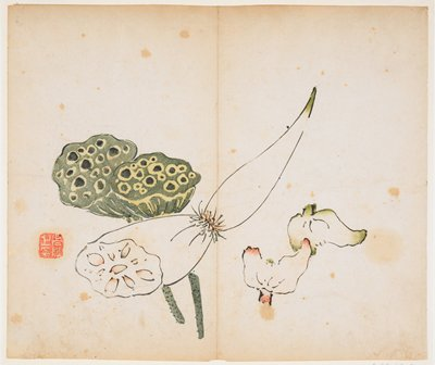 lotus roots and blooms; red seal lower left; album leaf